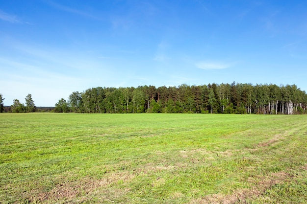 Skoszona trawa w pobliżu lasu. wiosna krajobraz z lasem w tle. łąka w paski