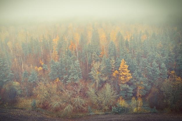 Skraj lasu w mistycznej mgle w listopadzie podczas zbioru grzybów
