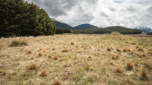 Skraj lasu z suchymi kępami na pierwszym planie i górami w tle jeziora mavora nowa zelandia