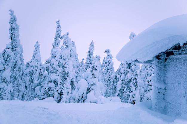 Skraj zimowego lasu świerkowego. dach i dookoła jest zasypany śniegiem