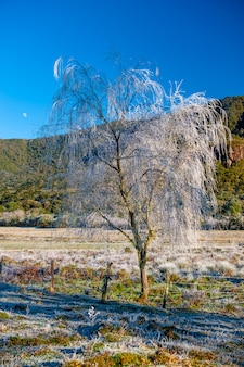 Skrystalizowany lód na drucie kolczastym zimą