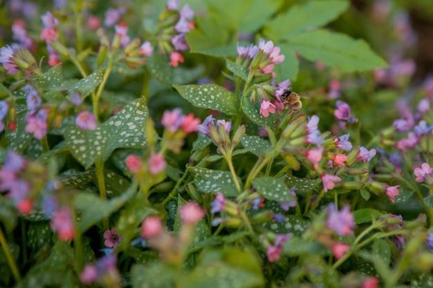 Skrzydlata pszczoła powoli leci do kwiatów