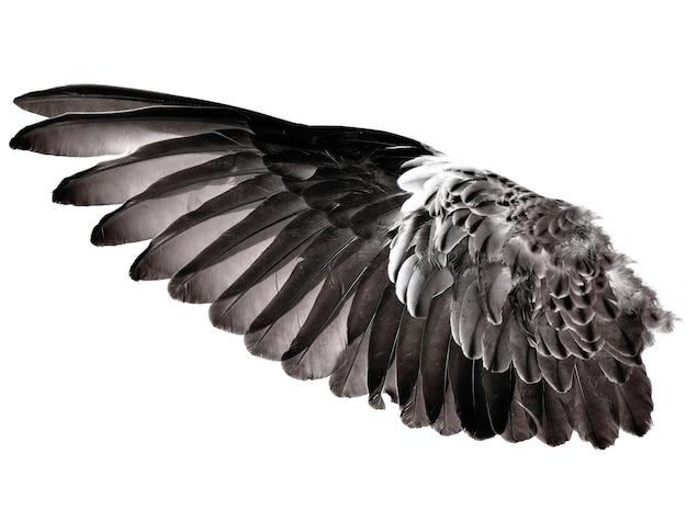 Skrzydło pióra ptaka na białym tle