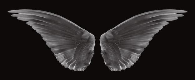 Skrzydło ptaków na czarno