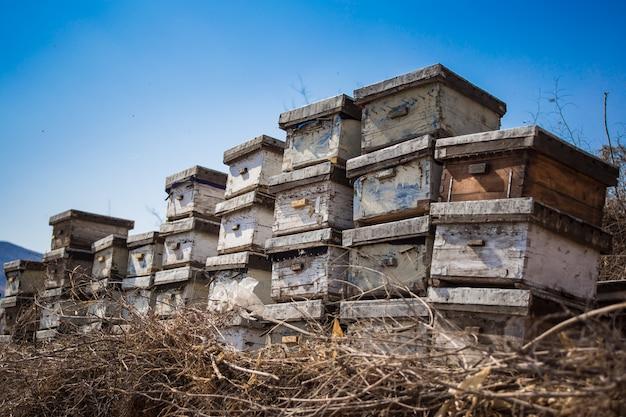 Skrzynki pszczelarz