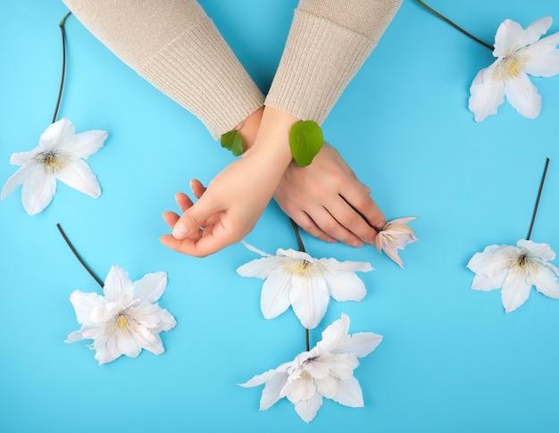 Skrzyżowane kobiece dłonie i kwitnący biały powojnik pąki na niebieskim tle