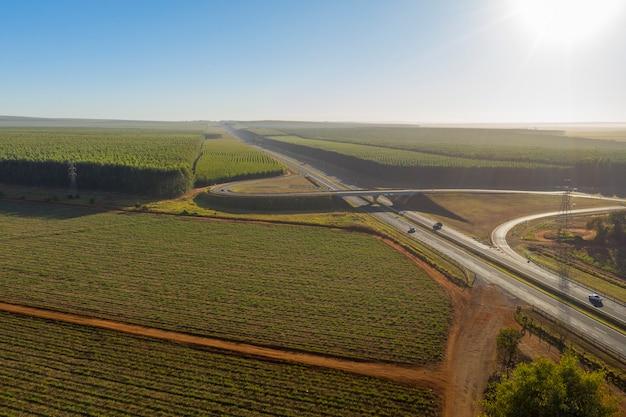 Skrzyżowanie autostrad z dużą plantacją eukaliptusa w słoneczny poranek.