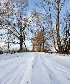 Ślad na drodze między drzewami w sezonie zimowym, krajobraz dzienny