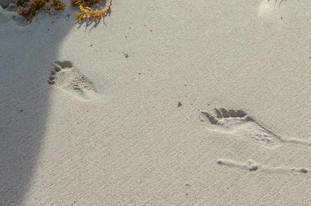 Ślad na piasku. mokry piasek z śladami stóp. wakacje na plaży