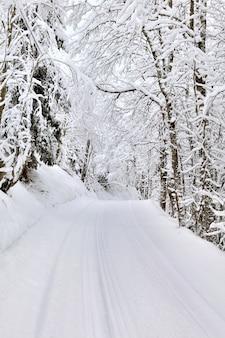Slade przejście lasu w zimie