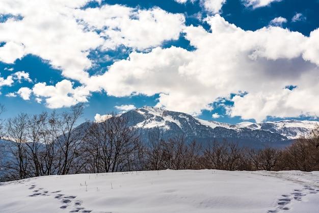 Ślady dzikich zwierząt na głębokim śniegu, zimowy krajobraz