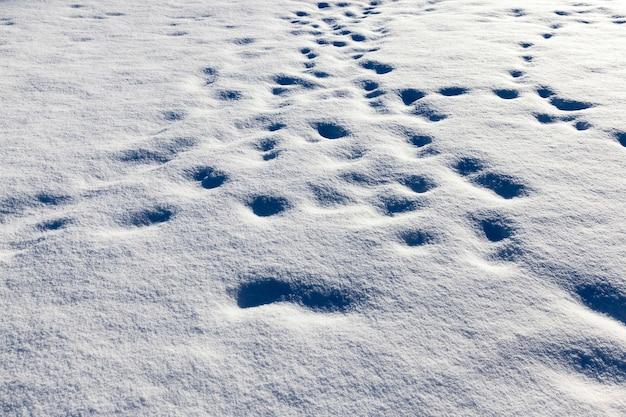 Ślady i wgniecenia na śniegu po tym, jak ludzie przeszli przez niego w sezonie zimowym