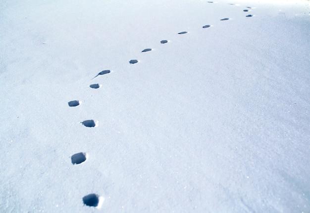 Ślady kota na białych śladach śniegu na białym tle
