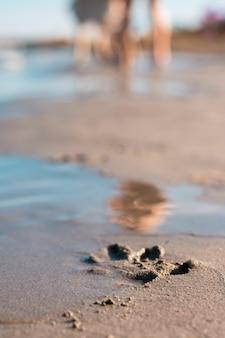Ślady łapy samotnego psa wydrukowane w piasku na plaży