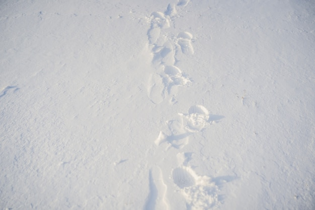 Ślady na śniegu. tło zima śnieg