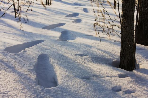 Ślady na śniegu w lesie
