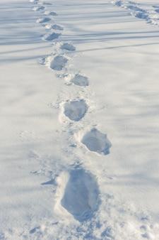 Ślady na świeżym śniegu