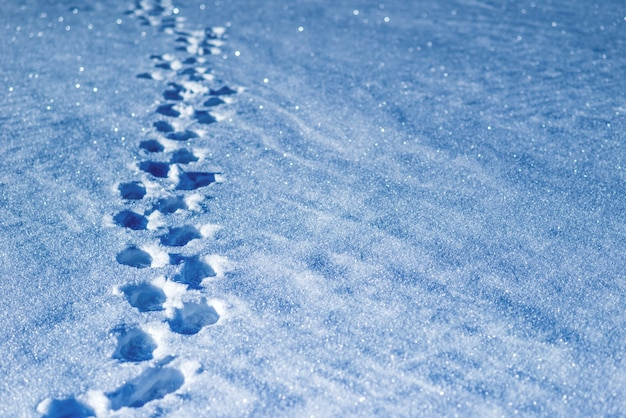 Ślady niezidentyfikowanego mężczyzny na śniegu w słoneczny mroźny da zima