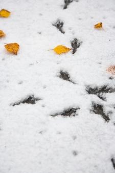 Ślady ptaków na śniegu. pierwszy śnieg, opadłe jesienne liście. początek zimy.