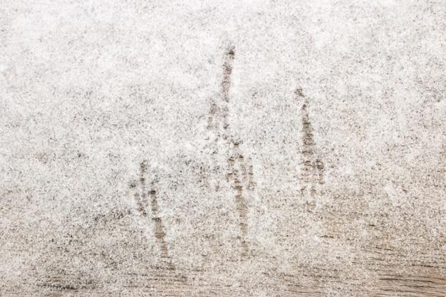 Ślady ptaków na śniegu