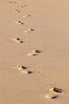 Ślady ślady wychodzące w oddali na piasku