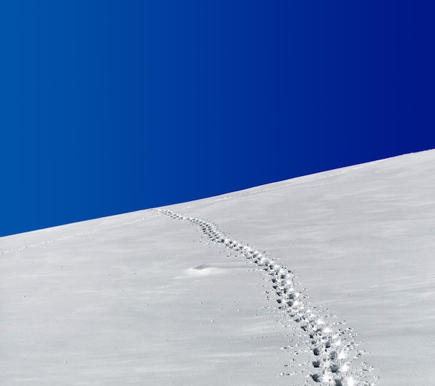 Ślady w polu śniegu pod błękitnym niebem