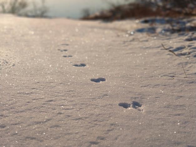 Ślady zwierząt na śniegu w słońcu