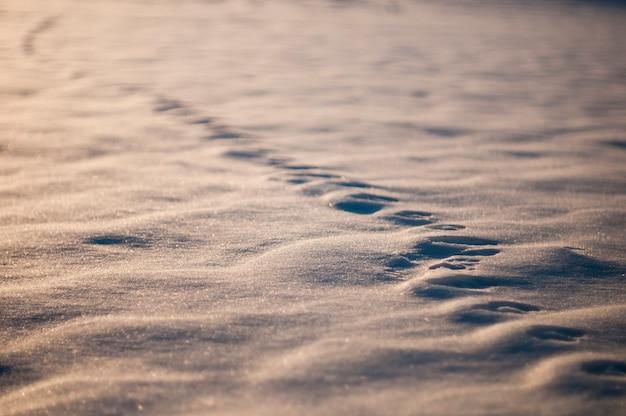 Ślady zwierząt w śniegu