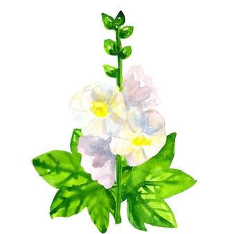 Ślaz biały z liśćmi. ręcznie rysowane akwarela ilustracja. odosobniony.