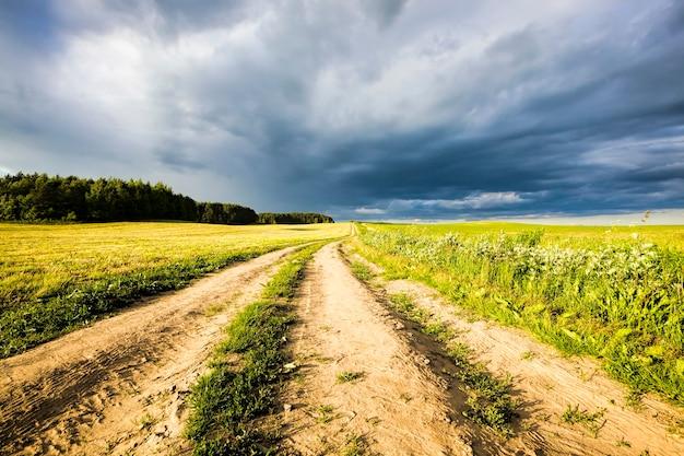Śledzić na polu