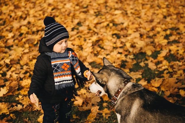 Śliczna chłopiec w żółtych liściach jesień park bawić się z husky psem