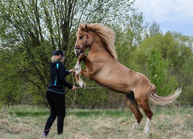 Śliczna dziewczyna trenuje młodego konia