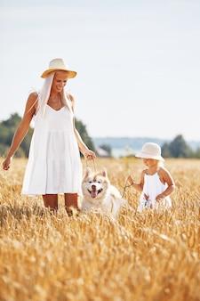 Śliczna dziewczynka z mamą i psem na polu pszenicy. szczęśliwa młoda rodzina spędza czas razem na łonie natury. mama, mała dziewczynka i pies husky, odpoczynek na świeżym powietrzu. wspólnota, miłość, koncepcja szczęścia.