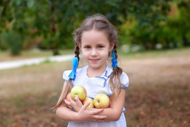 Śliczna mała dziewczynka z dwoma warkoczykami zbieranie jabłek w sadzie jabłkowym. uśmiechnięte dziecko trzyma jabłka w ogrodzie. koncepcja zbioru.
