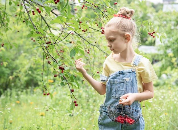 Śliczna mała dziewczynka zbiera wiśnię z drzewa w wiśniowym ogrodzie