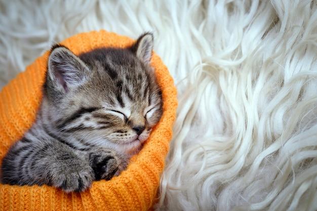 Śliczna mała szara figlarka śpi na białym futerku
