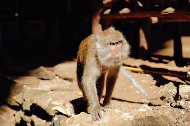 Śliczna małpa mieszka w naturalnym lesie tajlandii.