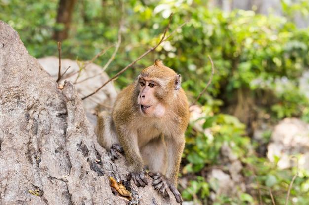 Śliczna małpa żyje w naturalnym lesie tajlandii.