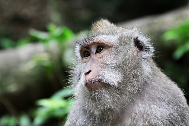 Śliczna małpa