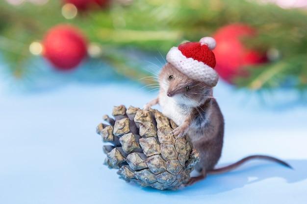 Śliczna mysz w świątecznym kapeluszu ze stożkiem lasu sosnowego.