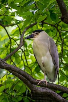 Śliczna ślepowron zwyczajny siedzący na gałęzi drzewa z rozmytym tłem