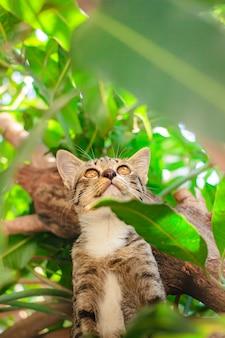 Śliczna tabby figlarka relaksuje na górze drzewa.