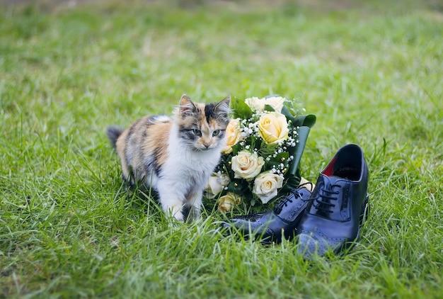 Śliczna urocza kotka w pobliżu bukiet panny młodej i buty ślubne pana młodego. calico kot na jasnozielonej trawie.