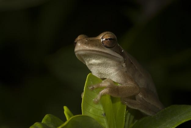 Śliczna żaba siedzi wśród liści z czarnym tłem