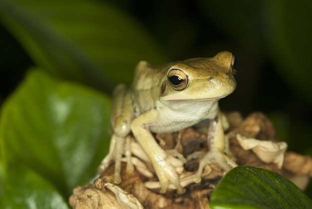Śliczna żaba siedzi wśród liści z niewyraźną ścianą