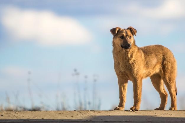 Śliczna żółtego psa pozycja przeciw niebieskiemu niebu