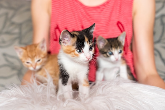 Śliczne kocięta w rękach kobiet właścicielka i jej zwierzaki urocze zwierzęta kotek relaksujący przytulny sen