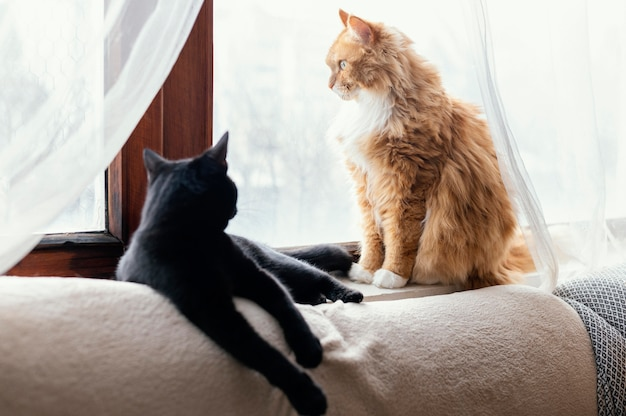 Śliczne koty r. w pomieszczeniu