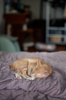 Śliczne krótkie włosy kotek azjatycki kot
