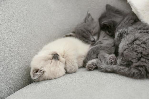 Śliczne małe kocięta odpoczywa na kanapie w domu